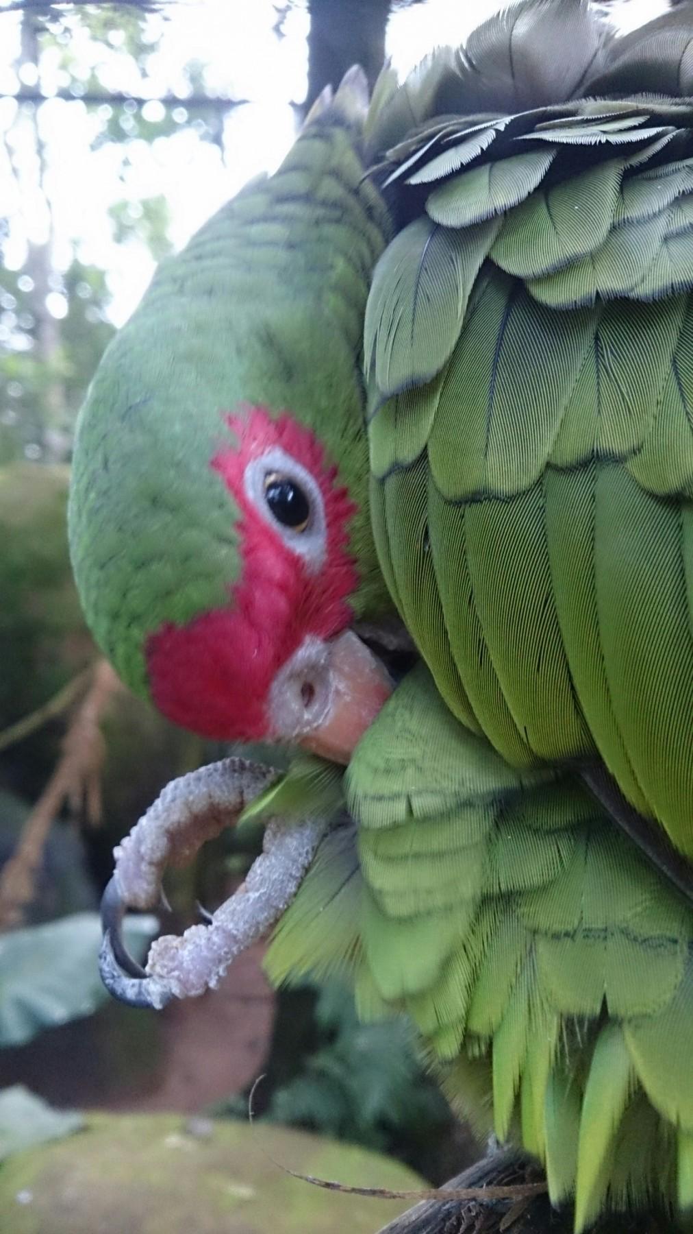 Roteiro-foz-do-iguaçu-parque-das-aves-3-1012x1800 Roteiro Foz do Iguaçu Completo (e ÉPICO) - 3 a 5 dias