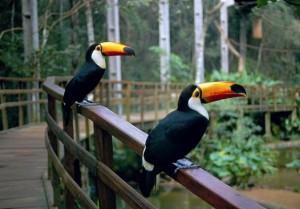 Roteiro-foz-do-iguaçu-parque-das-aves-6-300x209 Roteiro Foz do Iguaçu Completo (e ÉPICO) - 3 a 5 dias