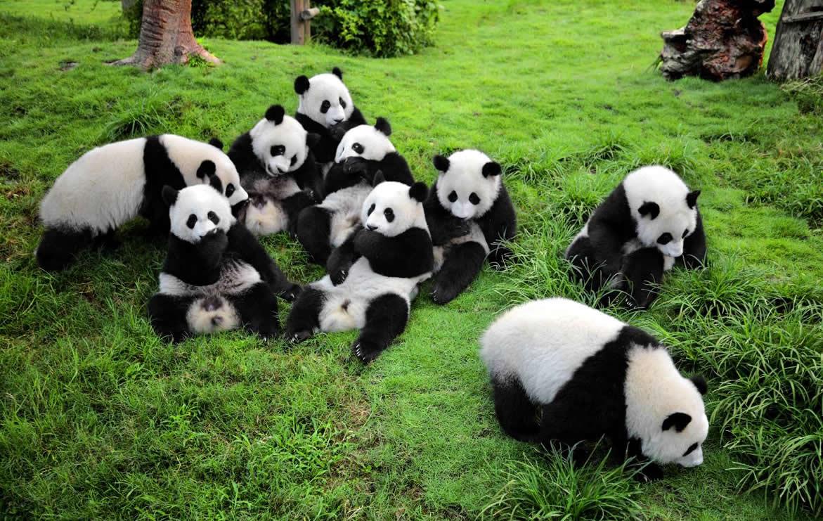 onde-ir-em-abril-18-reserva-de-pandas Onde ir em Abril? | Série 30 lugares em 30 dias