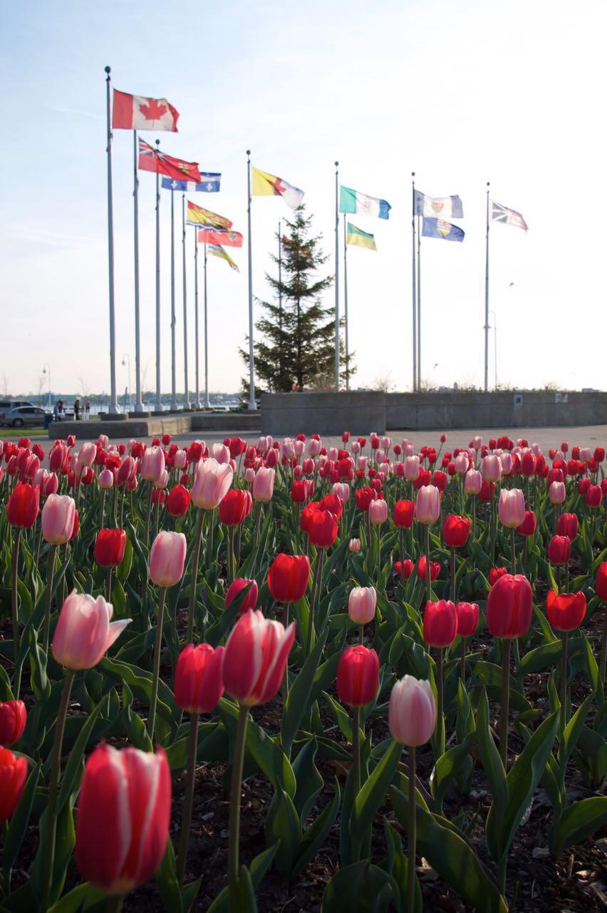 como-morar-no-canadá-19 Como morar no Canadá (vantagens e desvantagens)