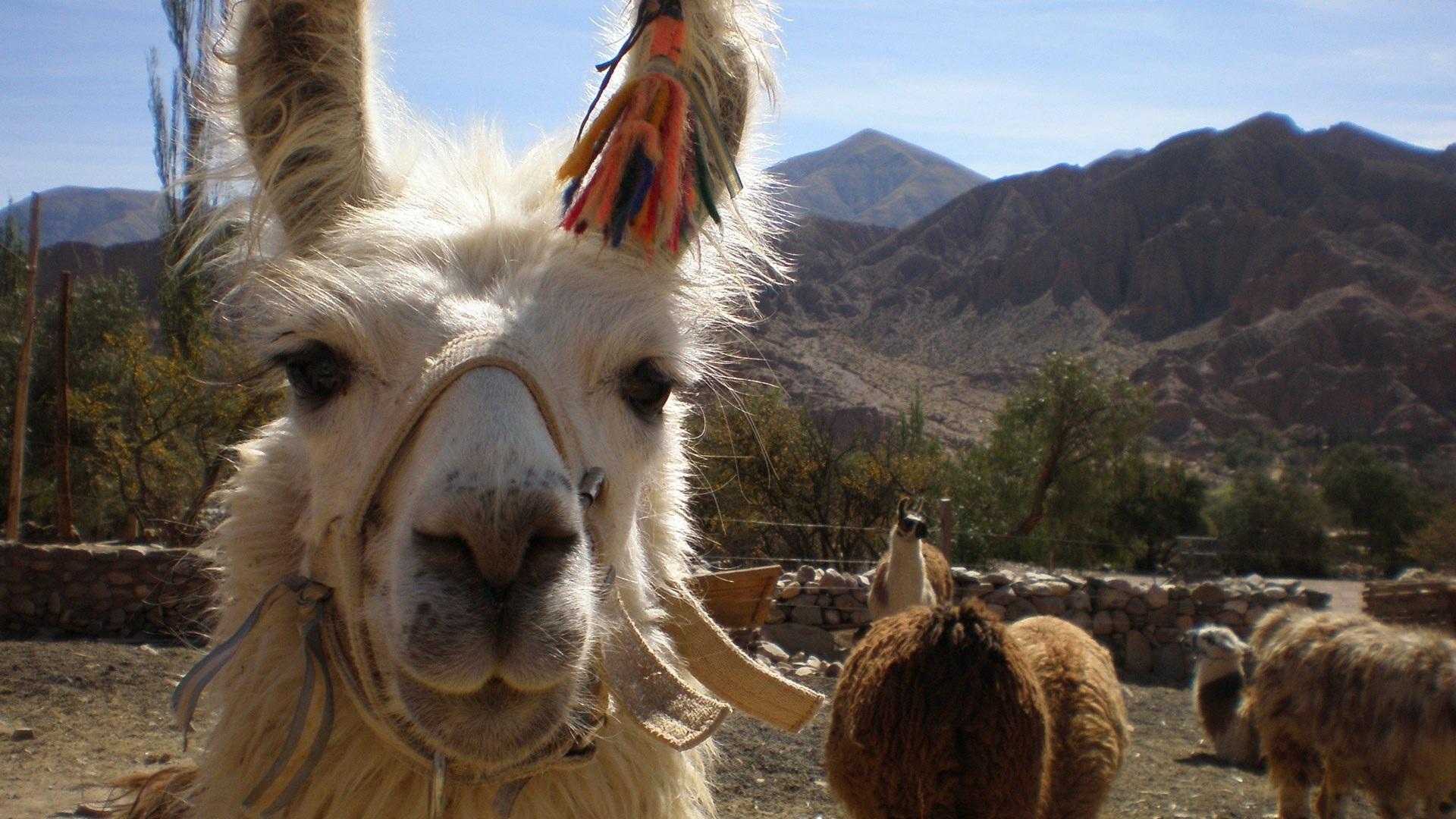 15-melhores-lugares-para-viajar-esse-ano-2018-bolivia-2 15 melhores lugares para viajar esse ano 2018