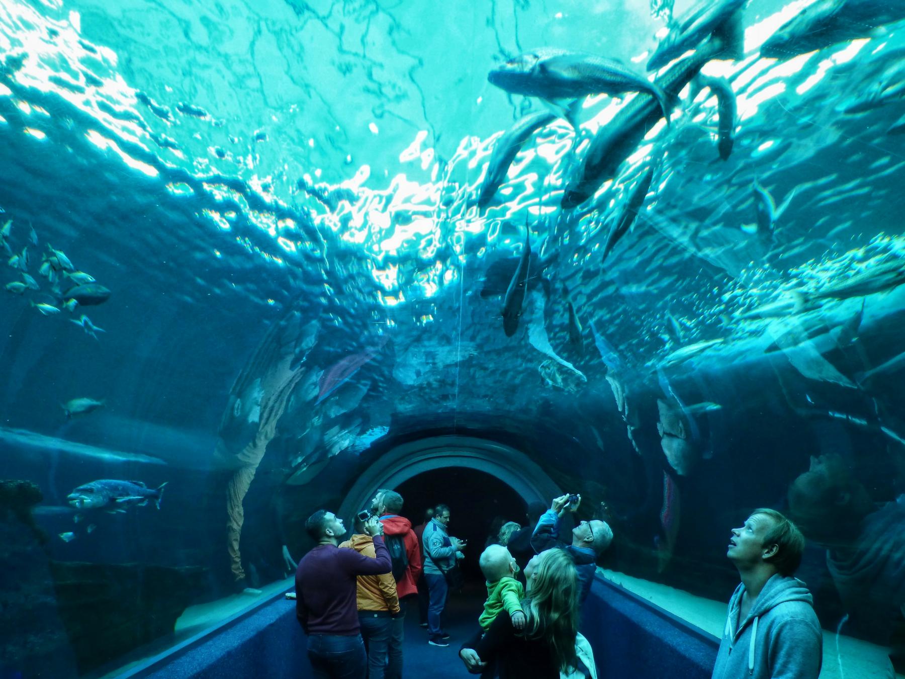 Roteiro-Cidade-do-Cabo-4-a-7-dias-aquario-two-oceans-tubarao Roteiro Cidade do Cabo 4 a 7 dias (Sensacional)!