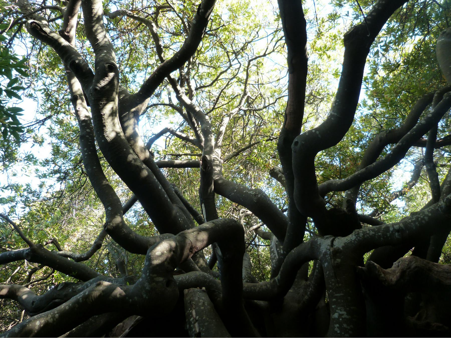 Roteiro-Cidade-do-Cabo-4-a-7-dias-jardim-botanico-Kirstenbosch Roteiro Cidade do Cabo 4 a 7 dias (Sensacional)!