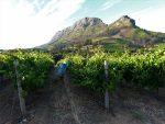 Rota-dos-vinhos-em-Cape-Town-Stellenbosch-e-Franschhoek--150x113 Dicas de viagem para feriados do Brasil em 2020