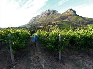 Rota-dos-vinhos-em-Cape-Town-Stellenbosch-e-Franschhoek--300x225 Rota dos vinhos em Cape Town Stellenbosch e Franschhoek