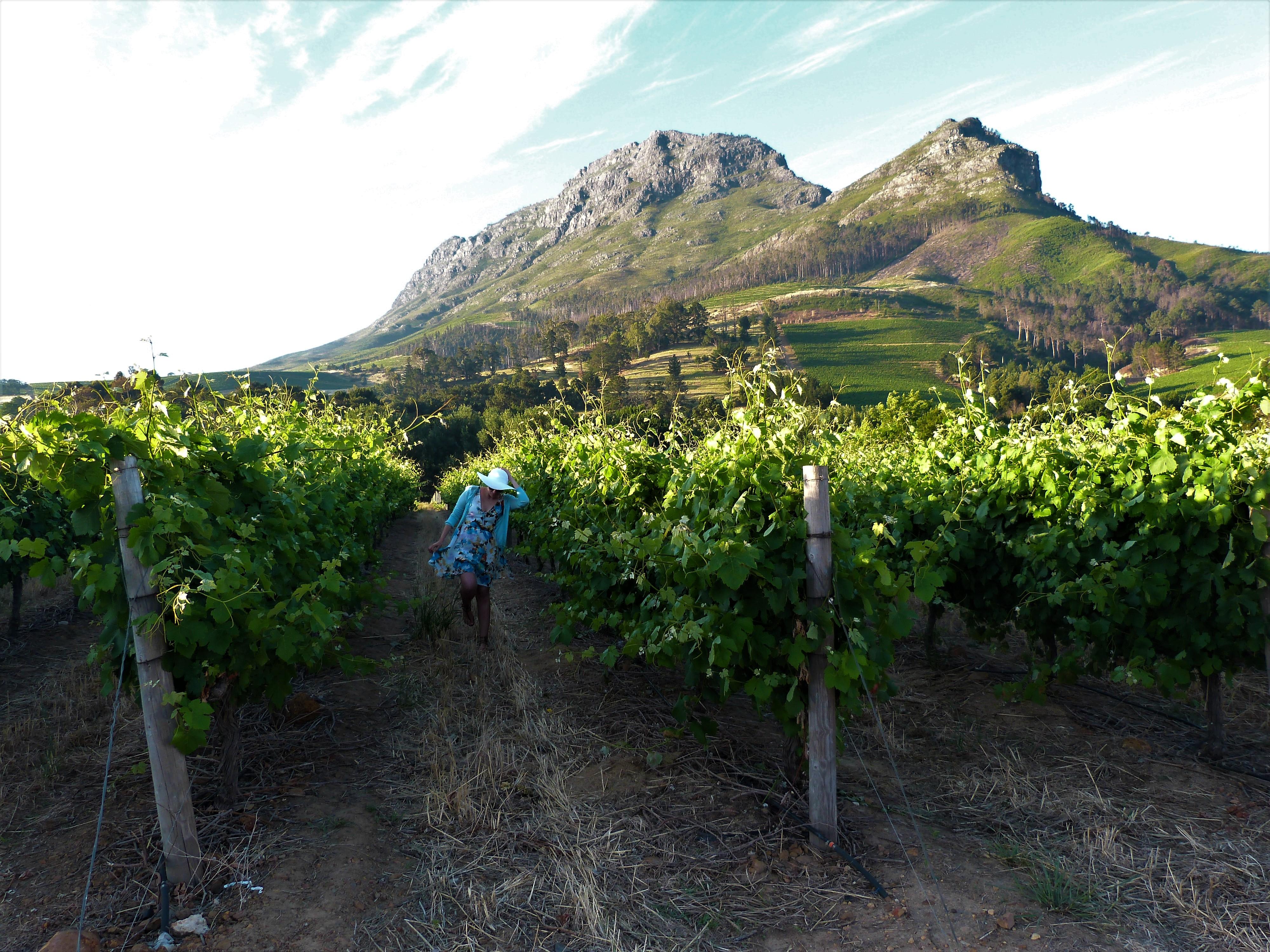 Rota-dos-vinhos-em-Cape-Town-Stellenbosch-e-Franschhoek- Rota dos vinhos em Cape Town Stellenbosch e Franschhoek
